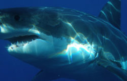 US tourist injured in Mexico shark attack