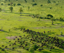 Tanzania to split Selous Game Reserve and establish new national park