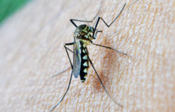 Florida health officials warn of deadly mosquito-borne virus