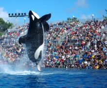 Coronavirus closure forces SeaWorld to furlough 90 percent of workers