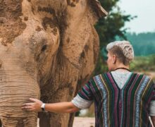 Thai elephants are starving as the number of tourists decline